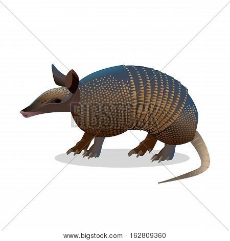 Armadillo isolated on white. Realistic placental mammal with leathery armour shell. Anteater and sloth icon. Little armoured one turtle rabbit. Used in the study of leprosy. Vector illustration