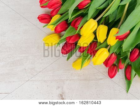 fresh yellow and red tulips flowers with green leaves on white aged background