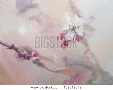 Sakura bloom watercolor background. Spring flowering. Pastel colors