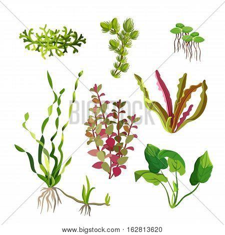 Aquarium plants set. Cartoon underwater algae. Seaweed natural elements. Decoration grass for fish tanks and terrariums. Ocean flora. Aquatic life. Branches and leaves. Vector illustration