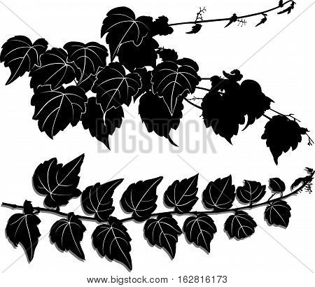 a sprig of of ivy nature silhouette