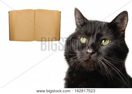 Cat And Old Book