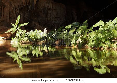 Green plant in the backlight of the Caatinga in Brazil