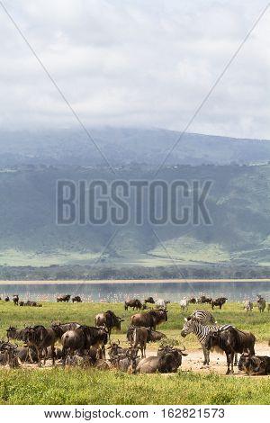 Lost paradise Ngorongoro. Crater NgoroNgoro, Tanzania, Africa