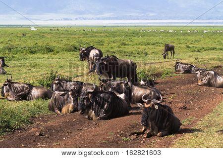 Closed world Ngorongoro. Lost world. Tanzania, Africa