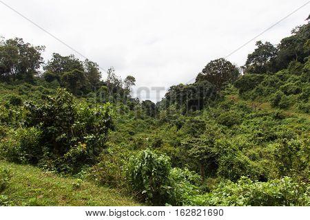 Wild green jungle in Aberdare. Kenya, Africa
