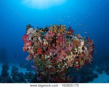 Coral Life Diving Sudan Soudan Red Sea Safari