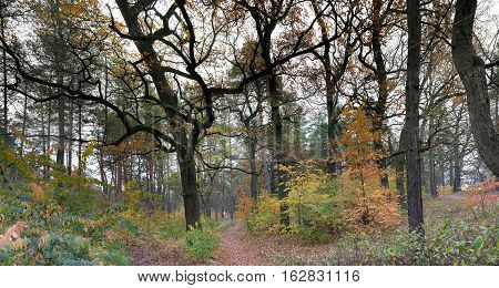 panoramic image of the forest in October
