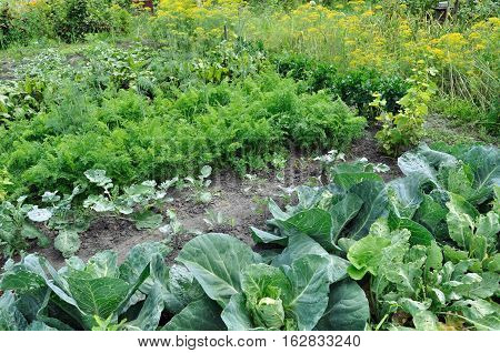 organically cultivated various vegetables in the vegetable garden