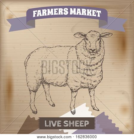 Vintage farmers market label with live sheep. Placed on wooden texture. Includes hand drawn elements.