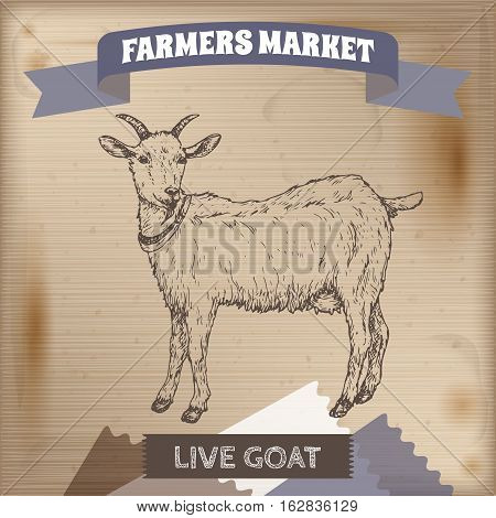 Vintage farmers market label with live goat. Placed on wooden texture. Includes hand drawn elements.