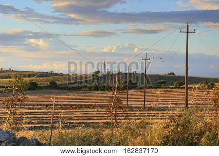 Summer landscape:harvested fields at sunset with rows of electric poles.Italy (Apulia).