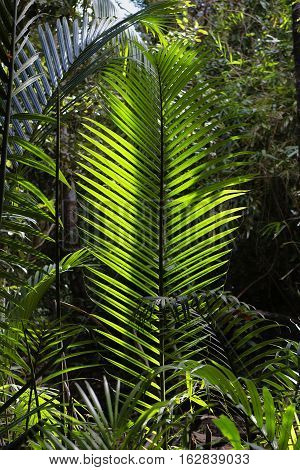 giant fern leaf growing in the jungle