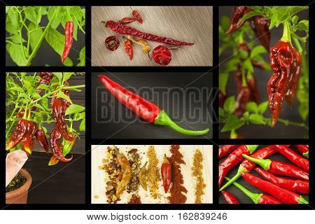 Advertising of spicy food. Collage of hot peppers. Advertising chili sale. Different kinds of chili.