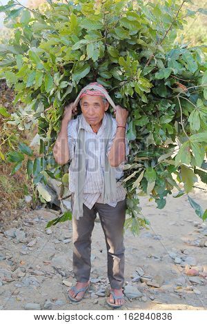 POKHARA, NEPAL - JANUARY 5, 2015: Nepalese man carrying green food load on his back near Pokhara, Nepal