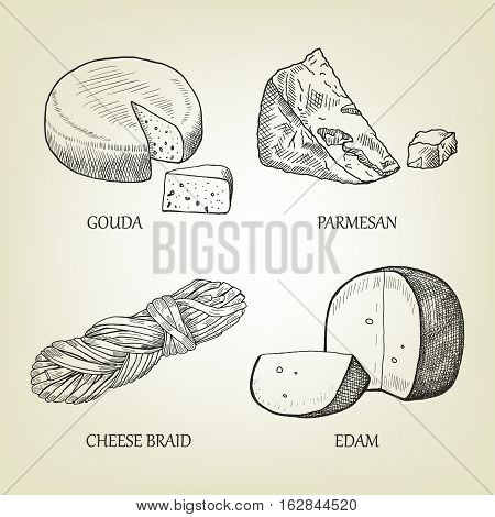 Sketch of different kinds of realistic cheese. Graphic vector collection include gouda, parmesan, braid and edam icon. Curd set used for advertising dairy product, restaurant menu or logo design