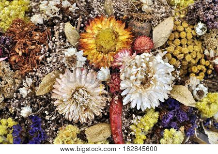 set of wild dried flowers in abstract composition