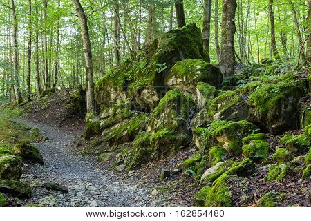 Forest landscape - path in green deciduous forest among mossy stones