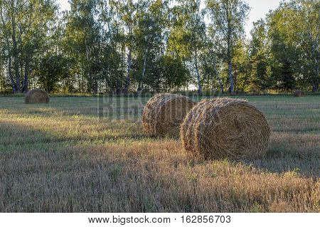 Straw Pressed Into Bales In The Background Forest