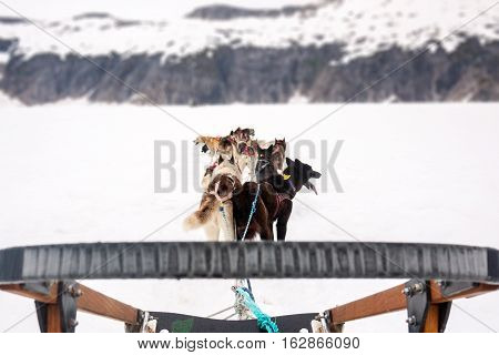 First person view of dog sled driver, with view of sled and dogs and mountain range in background