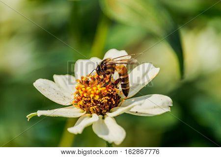 Closeup flower bee swarm in the gar den