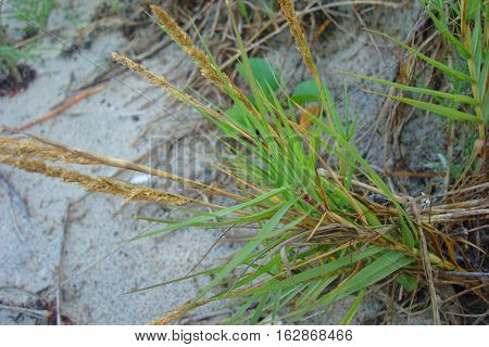 Yellow Dry Grass In The Field In Autumn Background