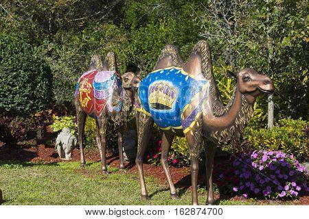 Gotha Florida - December 22nd 2016: Yard decorations of christmas camels in Gotha Florida - December 22nd 2016