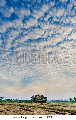 Cloudscape with altocumulus clouds Altocumulus middle-altitude cloud in stratocumuliform - natural background