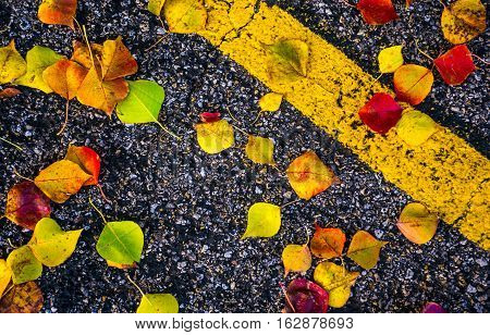 Fall Foliage bright brilliant Colors of Fall Autumn Colorful Leaves Central Texas on the ground with black asphalt