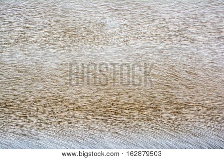 Bright fur mink. Fur texture. Fur texture and background.