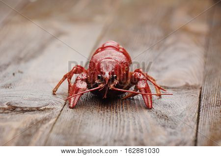 boiled crawfish on wet wooden surface  front view