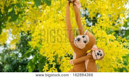 Monkey climbing tree Purity of Love Cassia Fistula is abstract of love and romantic