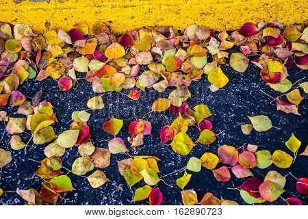 Close up Fall Foliage Leaves fall to the ground with yellow parking block, Fall Foliage bright brilliant Colors of Fall Autumn Colorful Leaves Central Texas