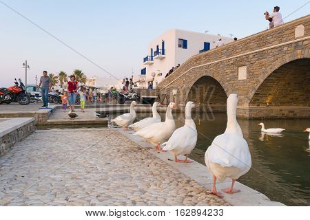 Paros, Greece 5 August 2016. People enjoying their summer vacations at Naoussa local village in Paros island watching the white gooses.