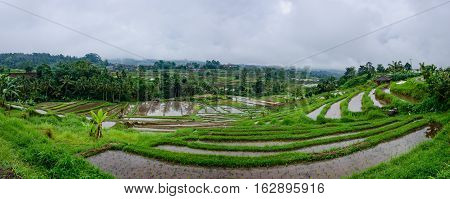 The Jatiluwih Rice terraces are recognised as an exemplar of water management by Unesco