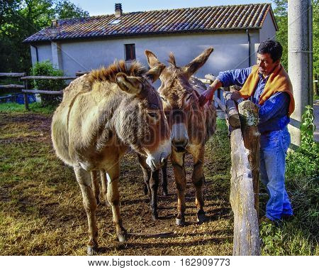 Two Donkeys In A Fence