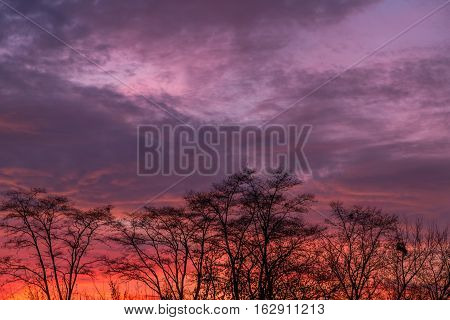 Setting sun with silhouettes of trees in savannah. Nature landscape.