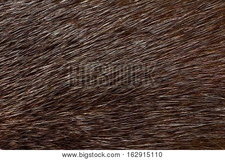 Dark fur mink. Fur texture and background.