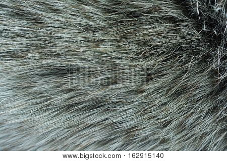 Fur arctic fox. Fur texture and background.