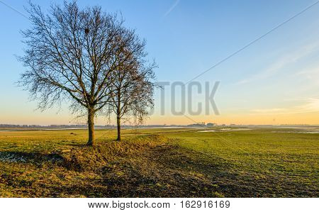 Two bare trees with whimsically shaped branches in a wide polder landscape in the Netherlands. It is autumn now.