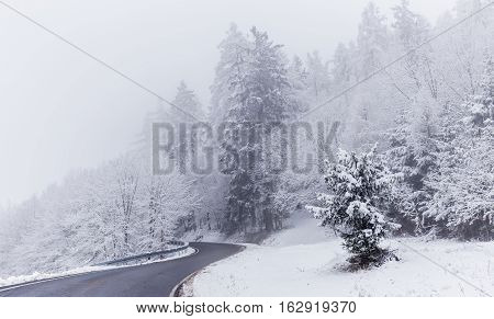 Road and trees covered with snow. Moravian landscape Ujezd u Boskovic.