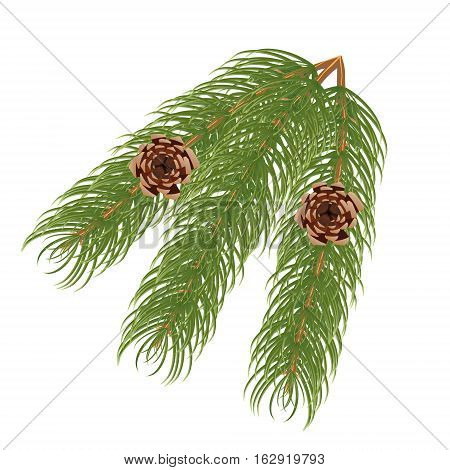 Pine branch with cones tree needle object pine