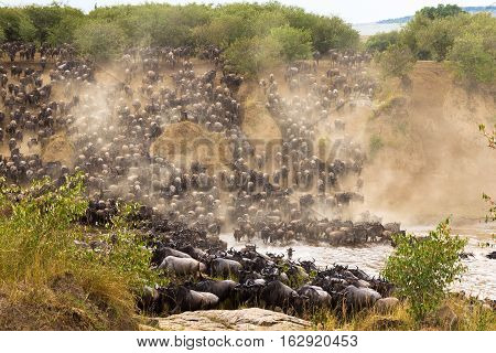 The great migration at the height. Africa, Kenya