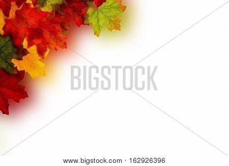 View of multi coloured leaves on a white background