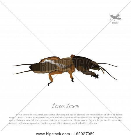 European mole cricket. Insect pests. Brown gryllotalpa. Vector illustration