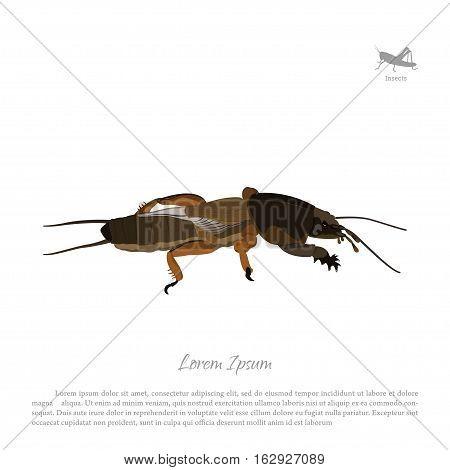 European mole cricket. Insect pests. Brown gryllotalpa. Vector illustration