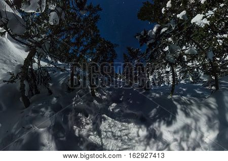 360 panorama winter forest under a starry sky.