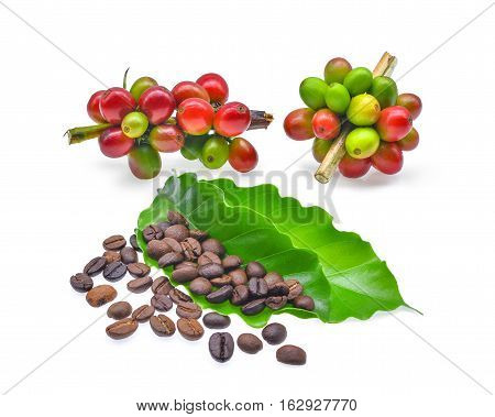 coffee beans with green coffee leaves isolated on white background