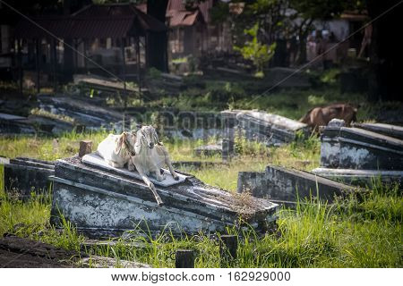 Cemetery In Surabaya