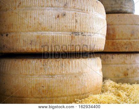 Aged pecorino, Italian sheep's milk cheese. Some cheese wheels in a street food market.
